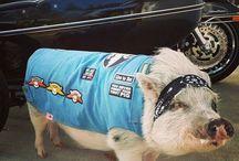 Snort Life Jackets / Mini Pig & Other Pet Jackets