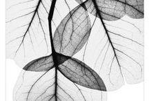 Black and White Prints