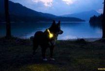 Leuchthalsband LEUCHTIE - LED light collar for dogs / Leuchthalsband LEUCHTIE - das innovative LED Halsband für Hunde  ist ein extrem heller, besonders langlebiger und sehr einfach anzulegender Leucht-Halsring nach dem neuesten Stand der Technik.  LEUCHTIE - the innovative LED light collar for dogs to be seen in!