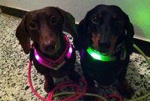 Leuchthalsband LEUCHTIE Mini / Leuchthalsband LEUCHTIE Mini - speziell entwickelt für kleine Hunde!