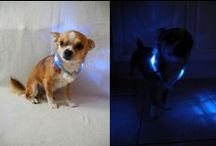 LED light collar LEUCHTIE for dogs / LEUCHTIE - the innovative LED light collar for dogs to be seen in! LEUCHTIE is an extremly bright glowing, durable and easy to handle luminous dog collar with the newest technologie made in germany.