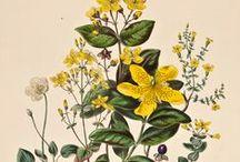Botanical print posters