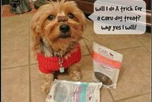 Caru Natural Treats / Natural recipe bites and bars. Incredibly nutritious. Irresistibly delicious. Caru Soft 'n Tasty dog treats are made in the USA. Absolutely grain, gluten and animal by-product free!