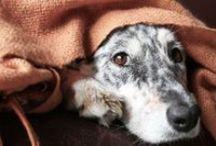 Caru Pet Health Tips / Keep your pet happy & healthy!