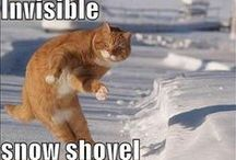 Lolcats invisible