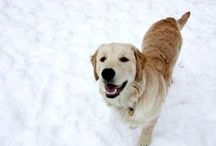 Inspired by Karu / It all started with Karu. No, that's not a misspelling – our Golden Retriever spells his name with a K!