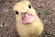 Cuties / Cute animals = cute pictures
