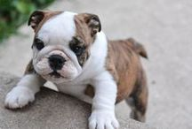 Cute Puppies / Cute Puppies
