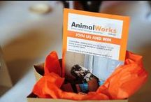 Animal Works Events / Fundraising events for our conservation projects