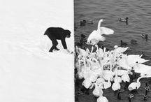 photography [  animal  ] / by Akira Sakamoto
