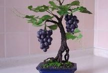 # BONSAI* / Bonsai Trees & Gardens