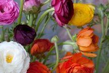 fleurs, plants, nature...... / by Orel Lyly