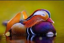 Птицы-звери