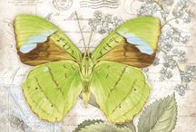 Printables:  Butterflies & insects / Illustrations of butterflies, insects & related garden pins