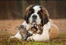 Кошки и собаки.