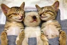 FABULOUS FELINES / I CAN'T IMAGINE MY HOME WITHOUT THE PITTER PATTER OF LITTLE KITTY FEET! / by Caroline