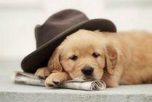 Dogs so cute