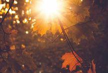 •autumn• / •autumn•