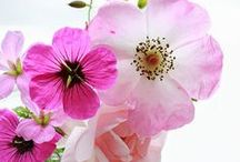 •flowers• / Flowers Tulips Spring