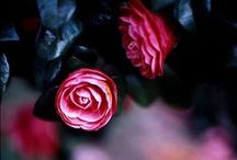 plants, flowers, greenery ❤️