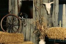 Country Western Theme Ideas / Here are some ideas I like for a Country Western theme party or event.