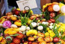 Crizanteme flowers