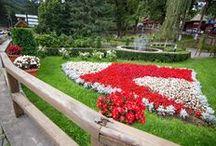 Oleander Garden - landscaping and gardening services / www.oleander.ro
