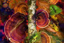Colors / by Janaina Netz