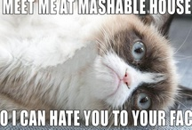 The best of MASHABLE