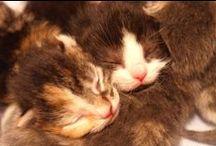 Onze katten / Dol op onze katten. Elke dag weer genieten!!!