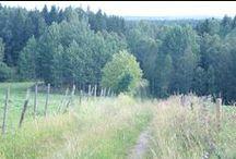 De weg. / Welke weg ga je? Welke weg is de goede weg? Waar leidt de weg heen of doorheen?