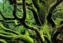 Terra / Earth Green South  Foundations Body