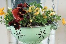 greenery / flores, garden, etc...