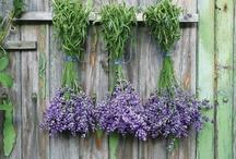 Lavender / Lawenda / Lavender - tips, inspirations Lawenda - porady, pomysły, inspiracje