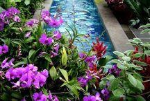 In the garden / by Jenna Miller