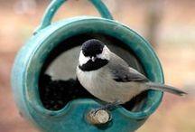 Birdhouses, feeders