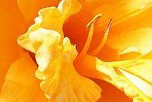NARANJA (amarillento)