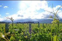 The Vineyard / Belsham Awatere Estate