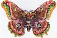 EPHEMERA - Butterflies / by Jeanelle