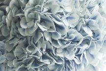 color story: iris blue + lavender