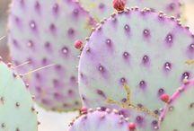 color story: lilac + mauve