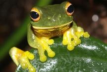 Frog / Photograph