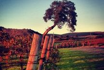 Laetitia Grounds / The beautiful Laetitia Estate property in Arroyo Grande Valley, CA. / by Laetitia Vineyard & Winery