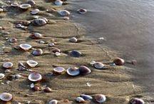 I See Sea Shells...... / by Ann Dahl