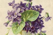 The Sweet Violet / by Ann Dahl