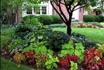 Gardens / by Donna Ballard