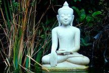 Feed The Soul / Food for meditation.  / by Bridget Doyle