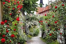 My Serenity Rose Garden~ / Roses.. / by Juanita Jackson