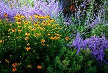 Flower Arrangements and Plants for the Garden