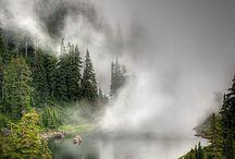 Fog / by Trishmeister
